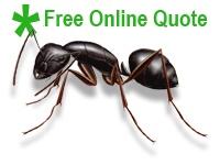 Sunrise Pest Management | Carpenter Ant