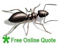 Sunrise Pest Management | Ants