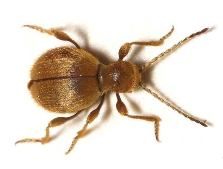 Read more about the article What Are Stored Product Pests?