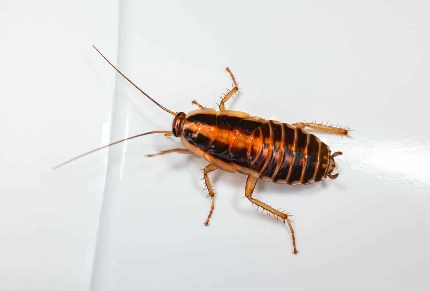 Read more about the article Cockroaches in Washington